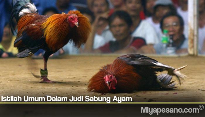 Istilah Umum Dalam Judi Sabung Ayam