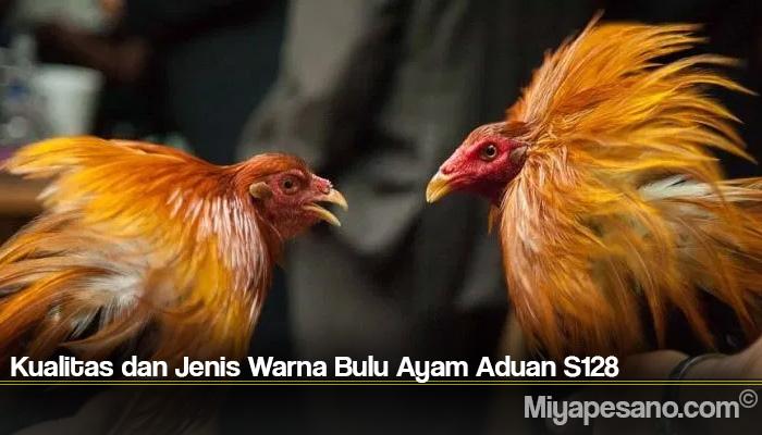 Kualitas dan Jenis Warna Bulu Ayam Aduan S128