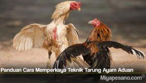 Panduan Cara Memperkaya Teknik Tarung Ayam Aduan