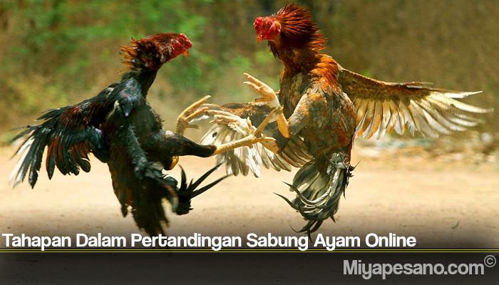 Tahapan Dalam Pertandingan Sabung Ayam Online
